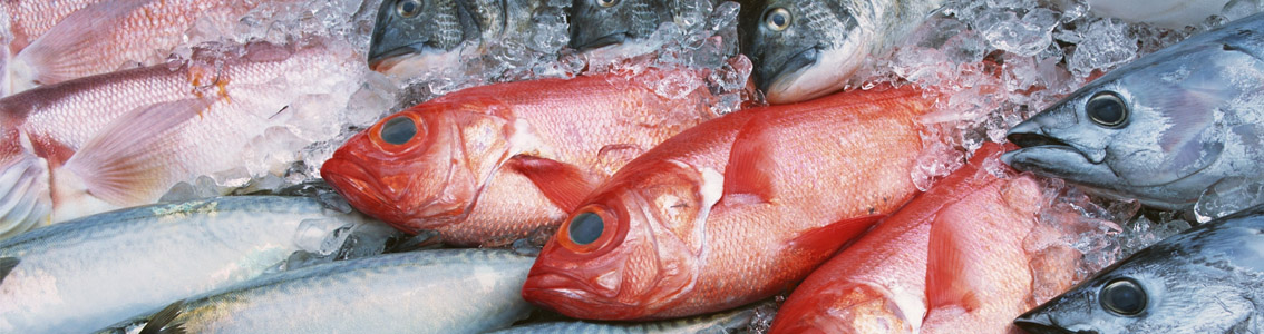 замороженная рыба оптом в москве