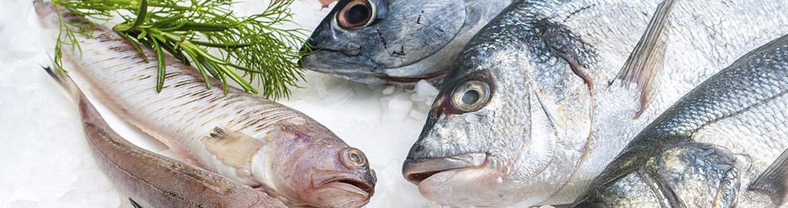 рыба опт розница москва