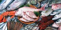 fish-mini2