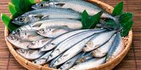 fish-mini3