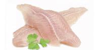 fish-mini4