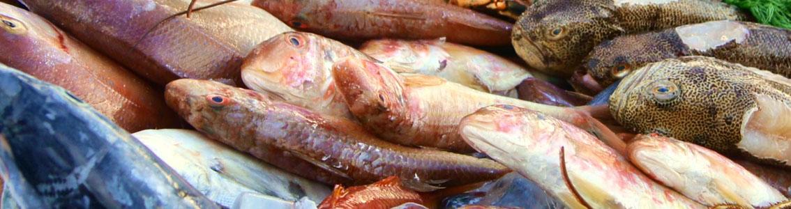 рыба мелким оптом москва